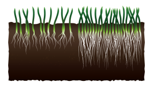 Grass Density Comparison 2D